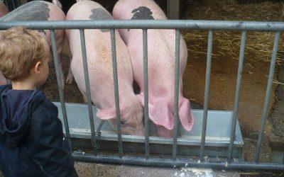 Visite à la ferme en Petite section